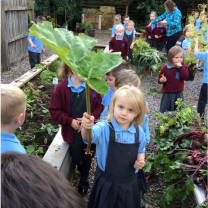 The Primary One Class Gardening Today